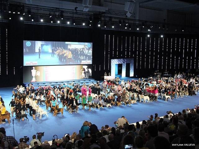Всемирная выставка собак в Финляндии.